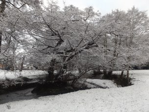 Queen's Park in Winter