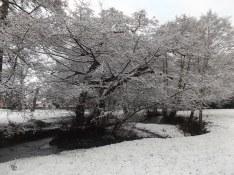 47. Queen's Park in Winter