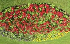 49. Queen's Park Flowerbed