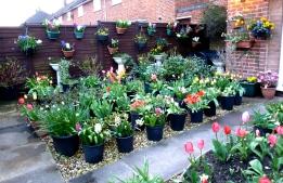 Spring Garden Competition entry 2016